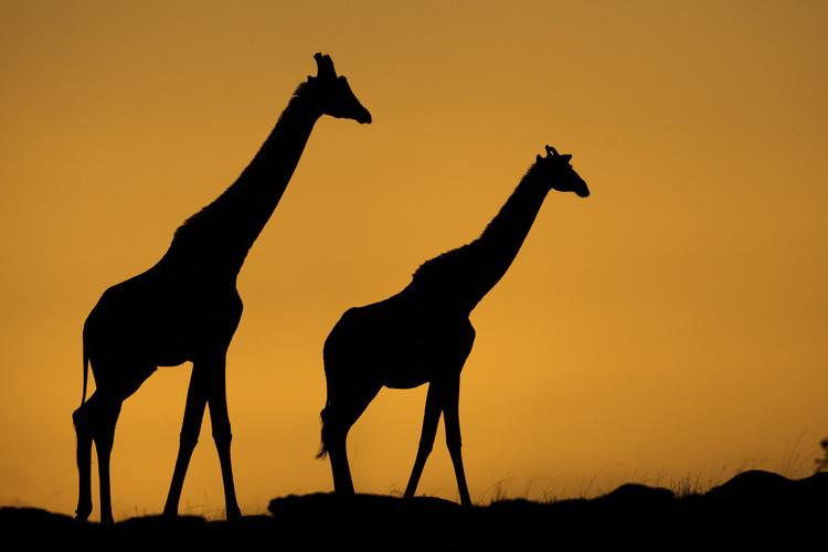 Masaï Mara par Tony Crocetta